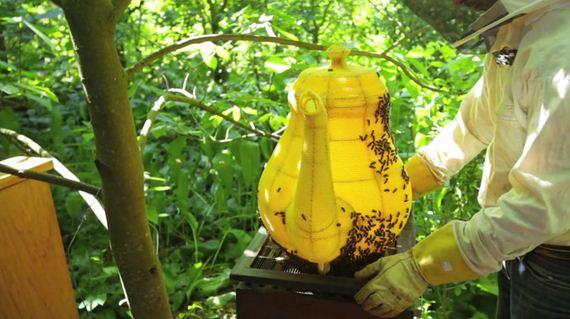04-bee-teapot