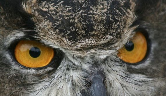 09-hypnosis-owl