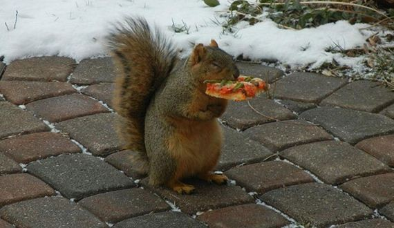 14-Squirrel-Pizza-Thieves