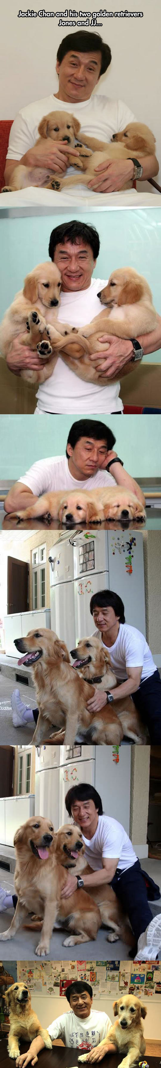 funny-Jackie-Chan-Golden-Retrievers