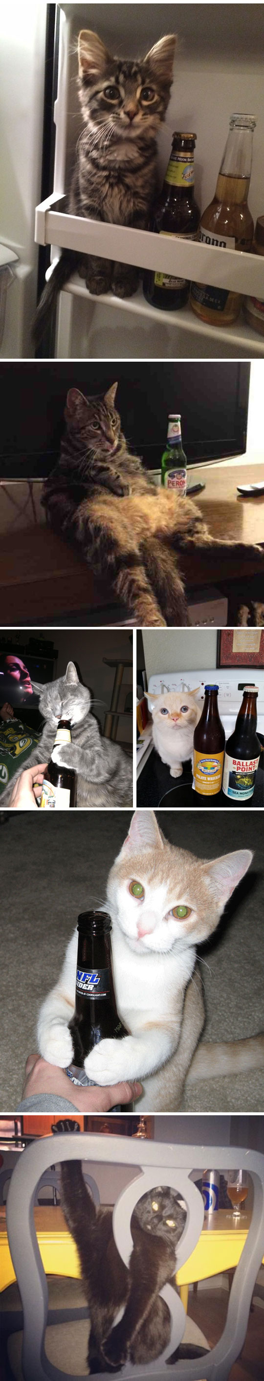 funny-Saint-Patrick-cats-beer