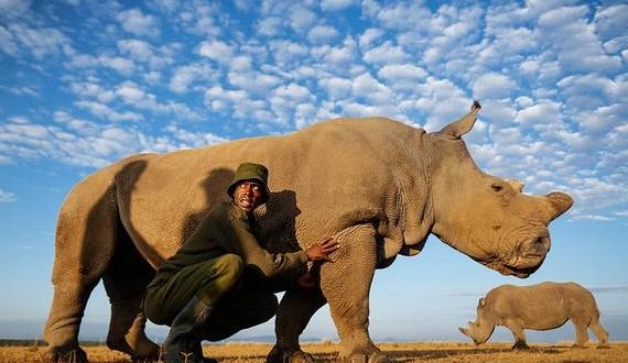 01-Kenya-extinction-rhino