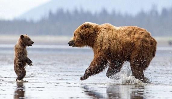 01-bears_hug
