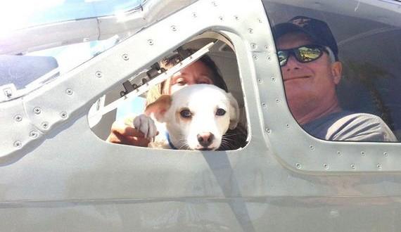 01-dog-rescue