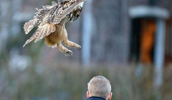01-landing-owl