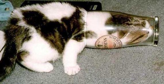 12-Cats-Liquid