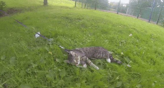 16-Cats-Laziness