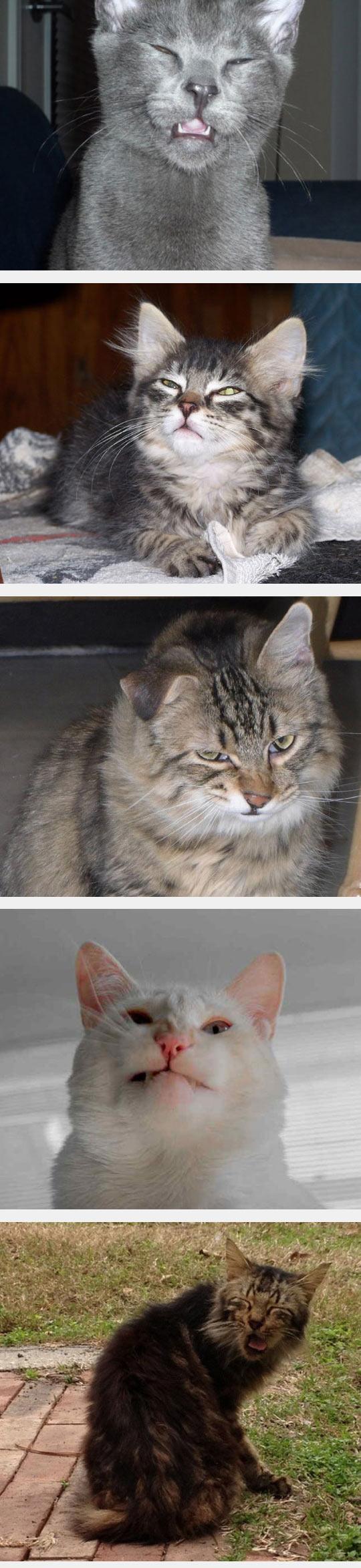 funny-cat-sneeze-face-weird-snout