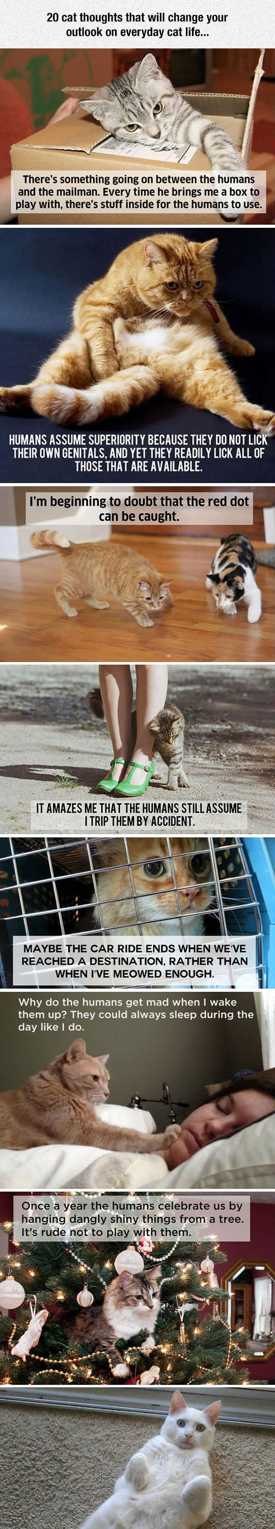 funny-cat-thoughts-human-behavior