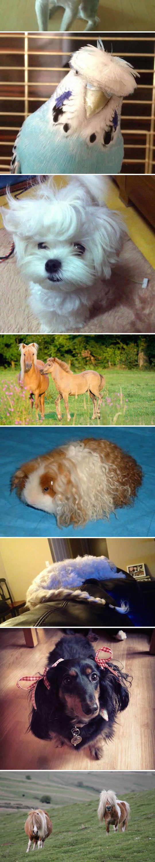 funny-bad-hair-day-pets