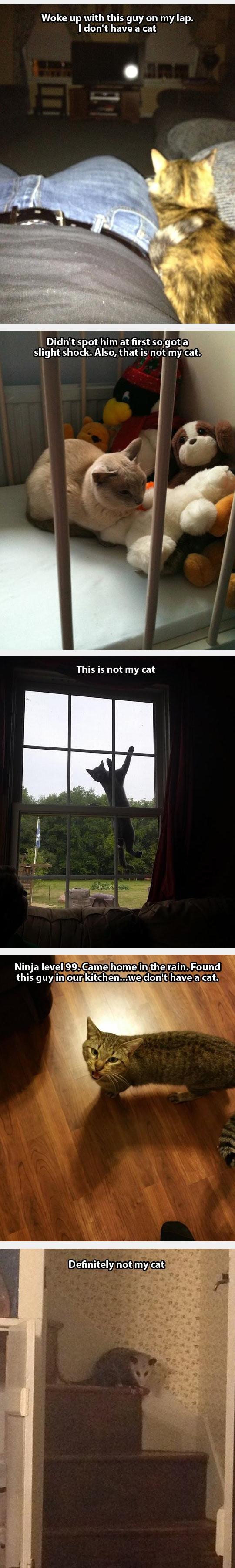 funny-cat-kitchen-owner-strange-inside