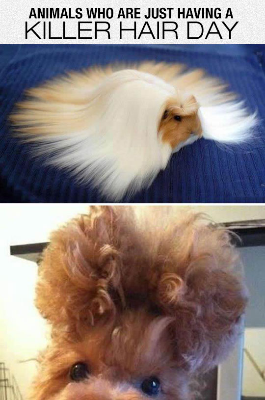 funny-pet-hair-horse-curly
