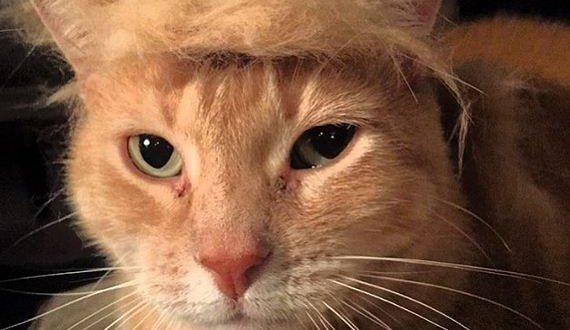 01-cats_with_trump_hair