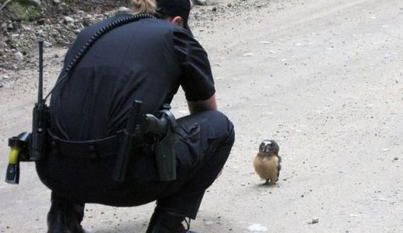 01-owl_police