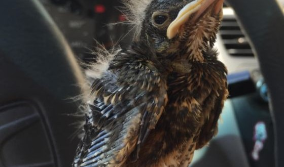 baby_bird_success_00