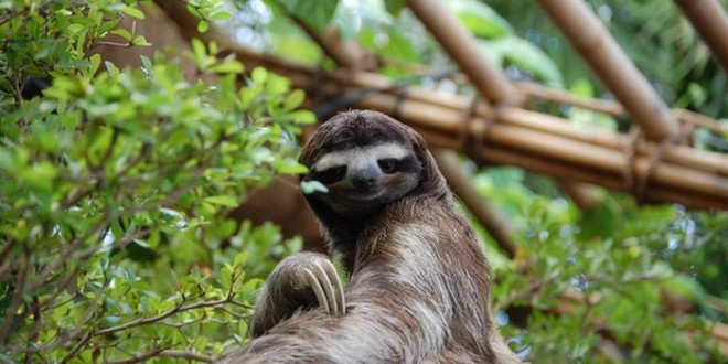 facts_about_sloths_00