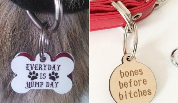 01-animal-tags