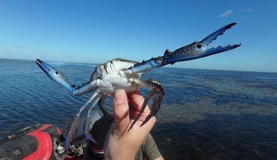 01-epic_crab_photoshop_battle