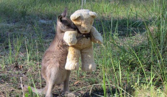01-orphaned_kangaroo