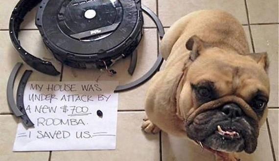 05-dogs_shame