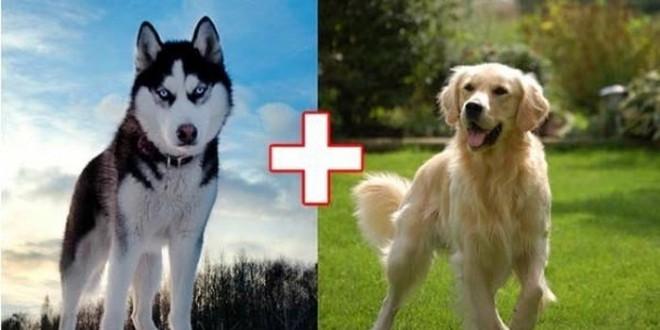 funny_cross_breeds_00