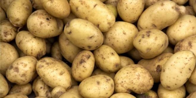 potato_00