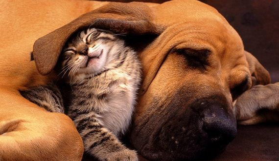 01-cats_and_dogs