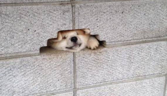 01-funny_puppy