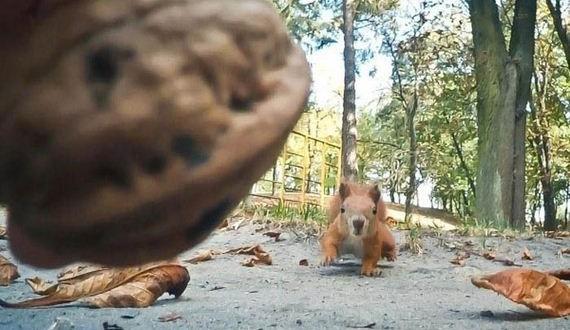 01-funny_squirrel