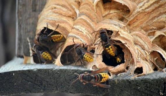 01-hornets_nest