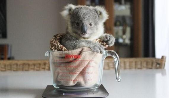 01-koala