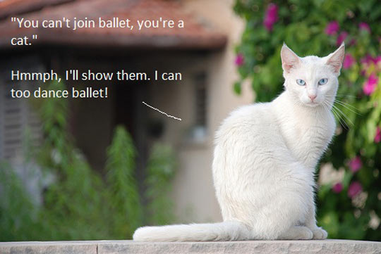 funny-cat-dance-proved-ballet