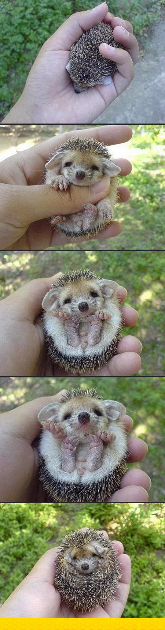 funny-cute-Baby-Hedgehog-ball-hand