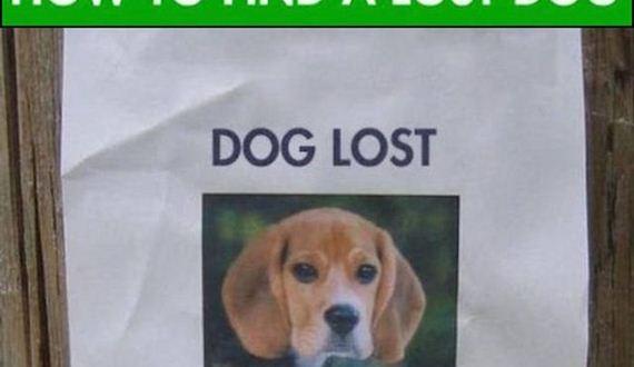 01-lost_dog