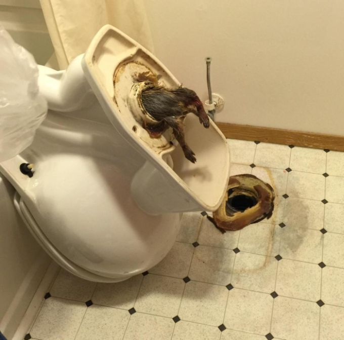 rats_and_toilets_01