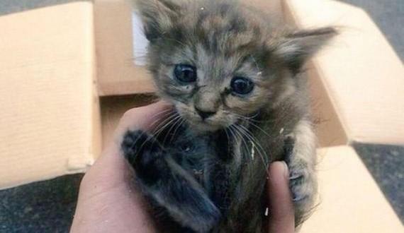 01-ferrets_kitty