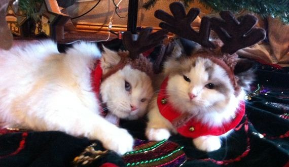 01-Cats-Christmas