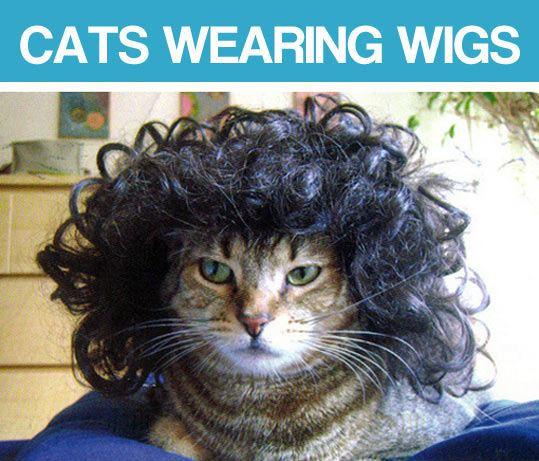 Wigs For Kitties 22