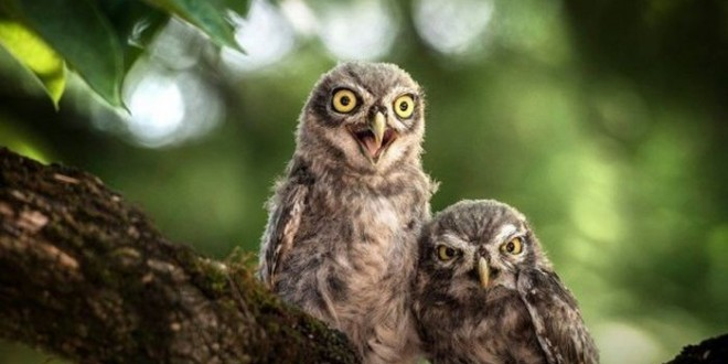 owl_ears_00