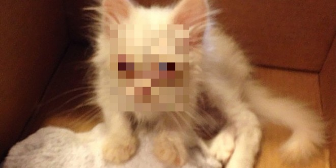 rescue_cat_00