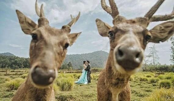 01-funny_wedding_photos