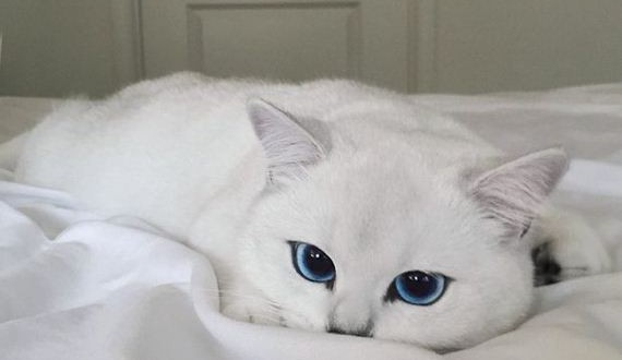 01-beautiful_eyes