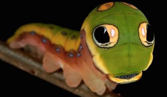 01-caterpillars