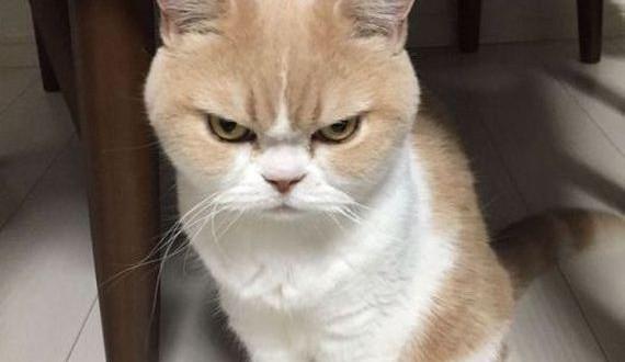 01-japanese_grumpy_cat
