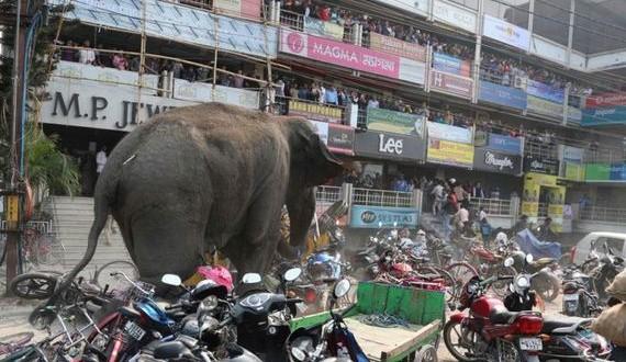 01-wild_elephant