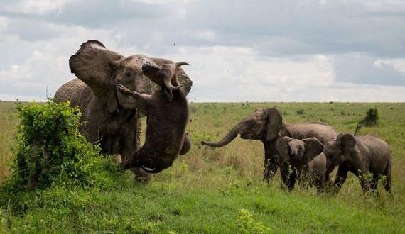 02-elephant_buffalo