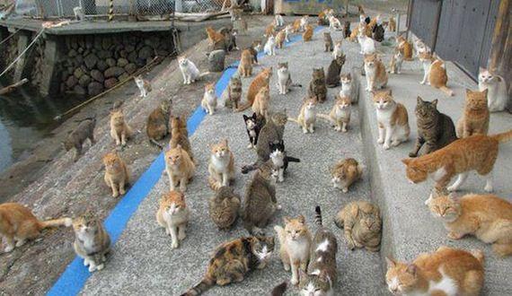 01-cat_food