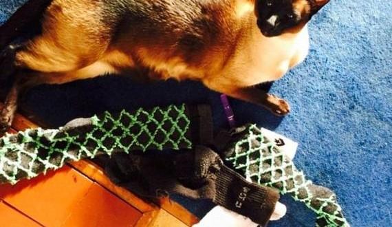 01-cat_steals_underwear