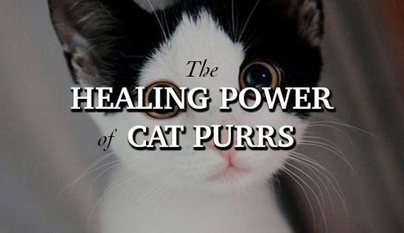 01-cats-will-heal-you