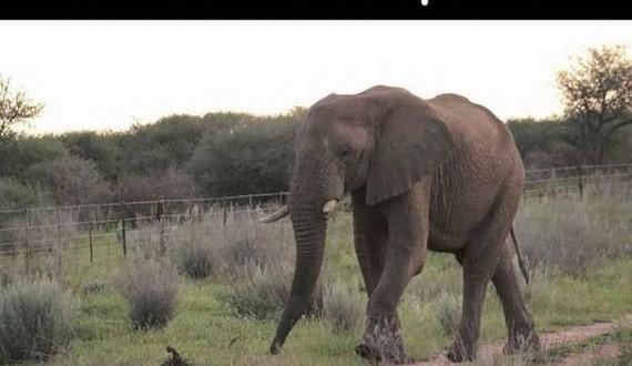 01-elephant